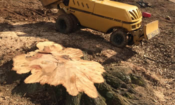 Stump Removal in Baton Rouge LA Stump Removal Services in Baton Rouge LA Stump Removal Professionals Baton Rouge LA Tree Services in Baton Rouge LA