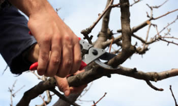 Tree Pruning in Baton Rouge LA Tree Pruning Services in Baton Rouge LA Quality Tree Pruning in Baton Rouge LA