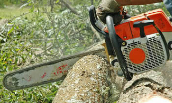 Tree Removal in Baton Rouge LA Tree Removal Quotes in Baton Rouge LA Tree Removal Estimates in Baton Rouge LA Tree Removal Services in Baton Rouge LA Tree Removal Professionals in Baton Rouge LA Tree Services in Baton Rouge LA
