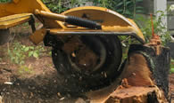 Stump Removal in Baton Rouge LA