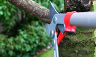 Tree Pruning Services in Baton Rouge LA