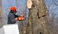 Tree Removal in Baton Rouge LA